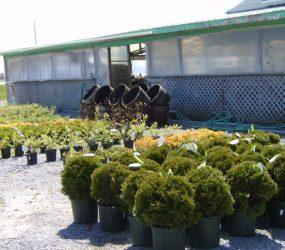 rhodes-greenhouses-garden-center-50