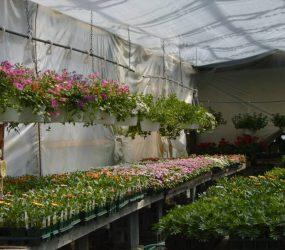 rhodes-greenhouses-garden-center-54