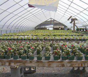 rhodes-greenhouses-garden-center-8