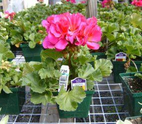 rhodes-greenhouses-garden-center-9
